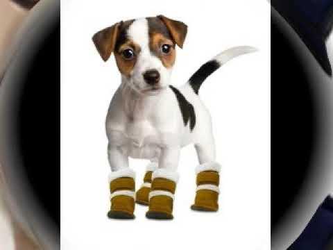 Купить обувь для собак в днепре - YouTube