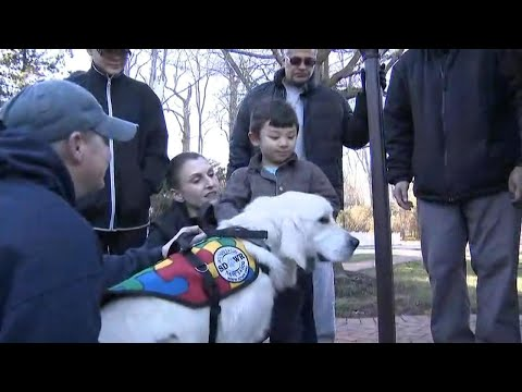Service Dog Accompanies Autistic Child To School