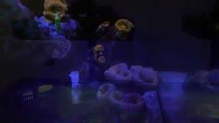 165 watt full spectrum mars aqua led ebay reef light 8 month review