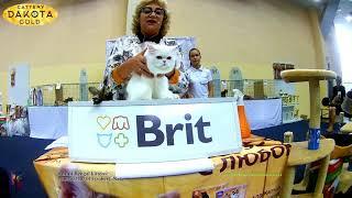 16092018, Выставка кошек, Харьков, Радмир Экспохолл, WCF, ринг котят и юниоров