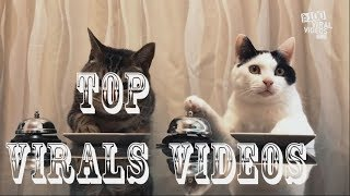 Most 43 Viral Videos of the year 2017
