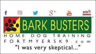 Schnauzer mixes - Dog Training of Fort Myers K9 - Patrick Logue Dog Trainer