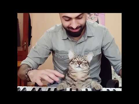 Cat Ponders Questions About Life While Playing Piano By Sarper Duman | 9GAGFunOff