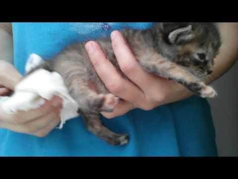 Как массировать животик котенку видео