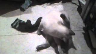 Мишель катается после вязки