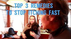 Top 3 Remedies To Stop Dog Itching Fast