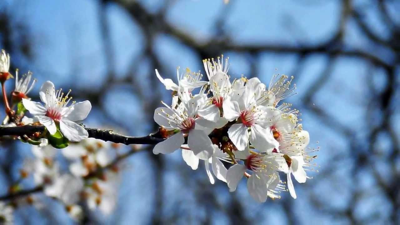 Скачать мелодию про весну