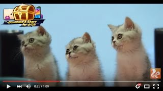 Super Cute Pets Discovering All on UC Browser 10.7! thumbnail