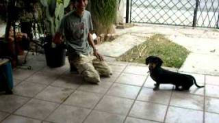This Video Previously Contained A Copyrighted Audio Track. Due To A Claim By A Copyright Holder, The Audio Track Has Been Muted.     Psychology - Operant Conditioning And Learning Behavior Project  On A Dog