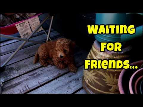 Puppy Waiting For Ferret Friends - Cute Animals Inside 4 - VOL. 47