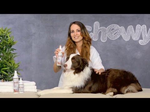 Dr. Gold's Ear Therapy And Itch Relief For Dogs And Cats | Chewy