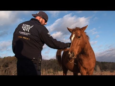 Texas Horse Rescue - Warning Graphic Footage