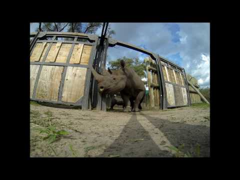 A Remarkable Rhino Rescue