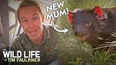 Just A Regular Sized Lizard Found In Outback Australia Full Episode Wildlife Of Tim Faulkner Youtube