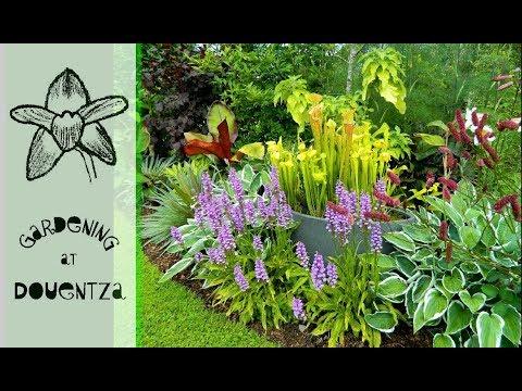 A Tour Of My Garden, Douentza in Wexford, Ireland
