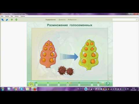 Как происходит опыление и оплодотворение у сосны обыкновенной