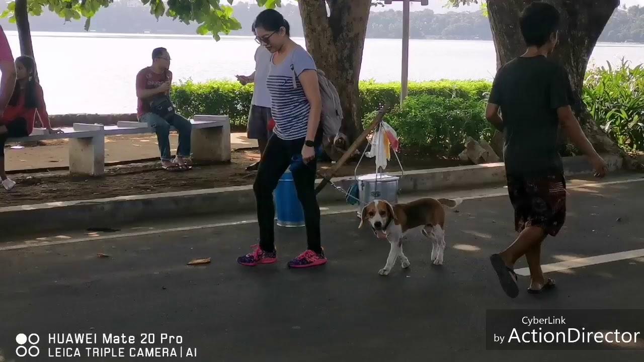 Download Benjie 101 Module 1 Understanding Dog, Heeling Training