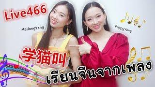 Live 446: เรียนจีนจากเพลง 学猫叫 Learn Chinese by PoppyYang