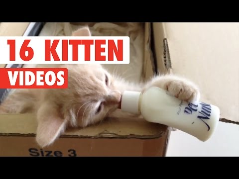 16 Funny Kittens | Cute Cat Video Compilation 2017