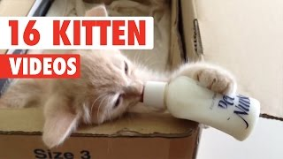 16 Funny Kittens   Cute Cat Video Compilation 2017