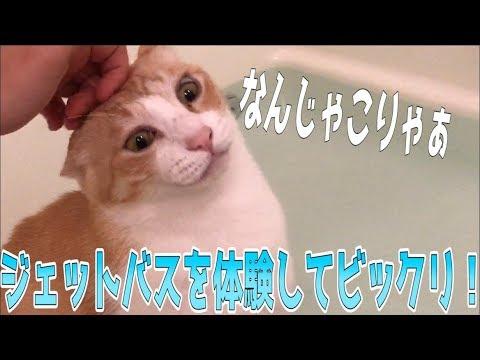 猫が風呂に入ってたのでジェットバスをONにしてみた【威力:強】