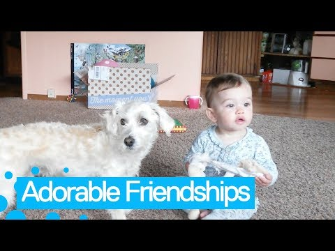 Top 15 Adorable Babies and Pets Moments | Funny Pet Compilation 2019
