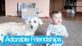 Top 15 Adorable Babies and Pets Moments   Funny Pet Compilation 2019