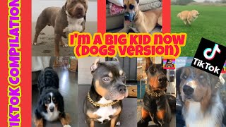 I'm  a big kid now  Challenge Tiktok Compilation (Dogs Version)