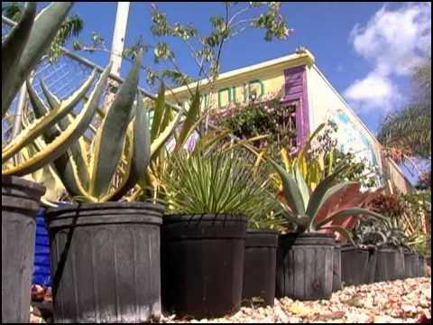 Waterways Episode 248 - Adopt-a-Reef AND Green Thumb Certified
