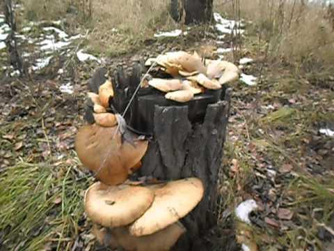 Детям о грибах. Грибы в сказках, рассказах, картинках