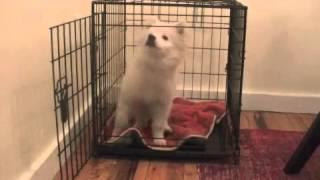 Puppy Crate Training Urban K-9 Dog Training