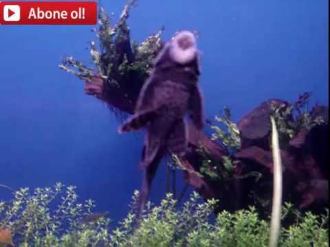 DÜNYANIN EN RAHATLATICI VİDEOSU BALIKLAR(Relaxing Ocean Fish, Aquarium Fish Tank & Relax Music )