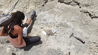 Live! Video Chat from a Dinosaur Dig