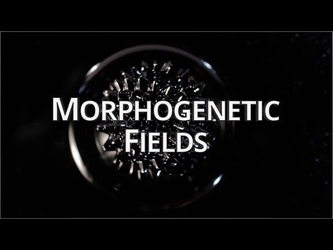 What Are Morphogenetic Fields? - Quantum University