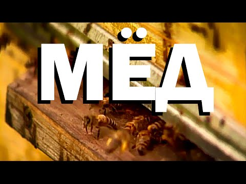 Как производится мед пчелами