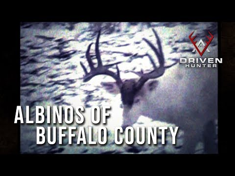 Albinos of Buffalo County | Throwback Hunts