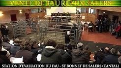 39 ° VENTE DE TAUREAUX SALERS. 1ère Série. STATION d'ÉVALUATION du FAU -ST BONNET DE SALERS (CANTAL)