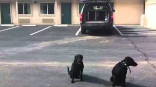 Dog Training Tip - Alternating Commands Helps Attention