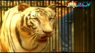 White tiger Malar from Delhi reaches Trivandrum zoo