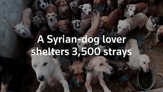 Animal lover shelters more than 3,500 dogs