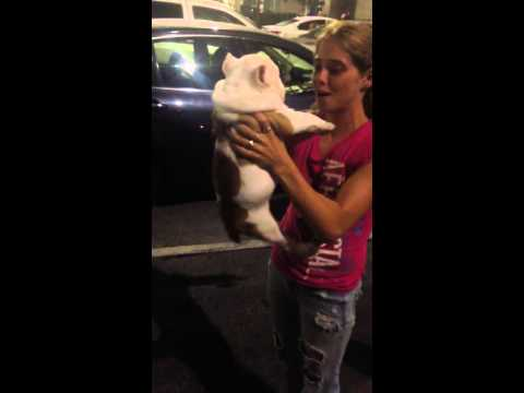 Jb Bullies customers receives New Puppy Rhode Island