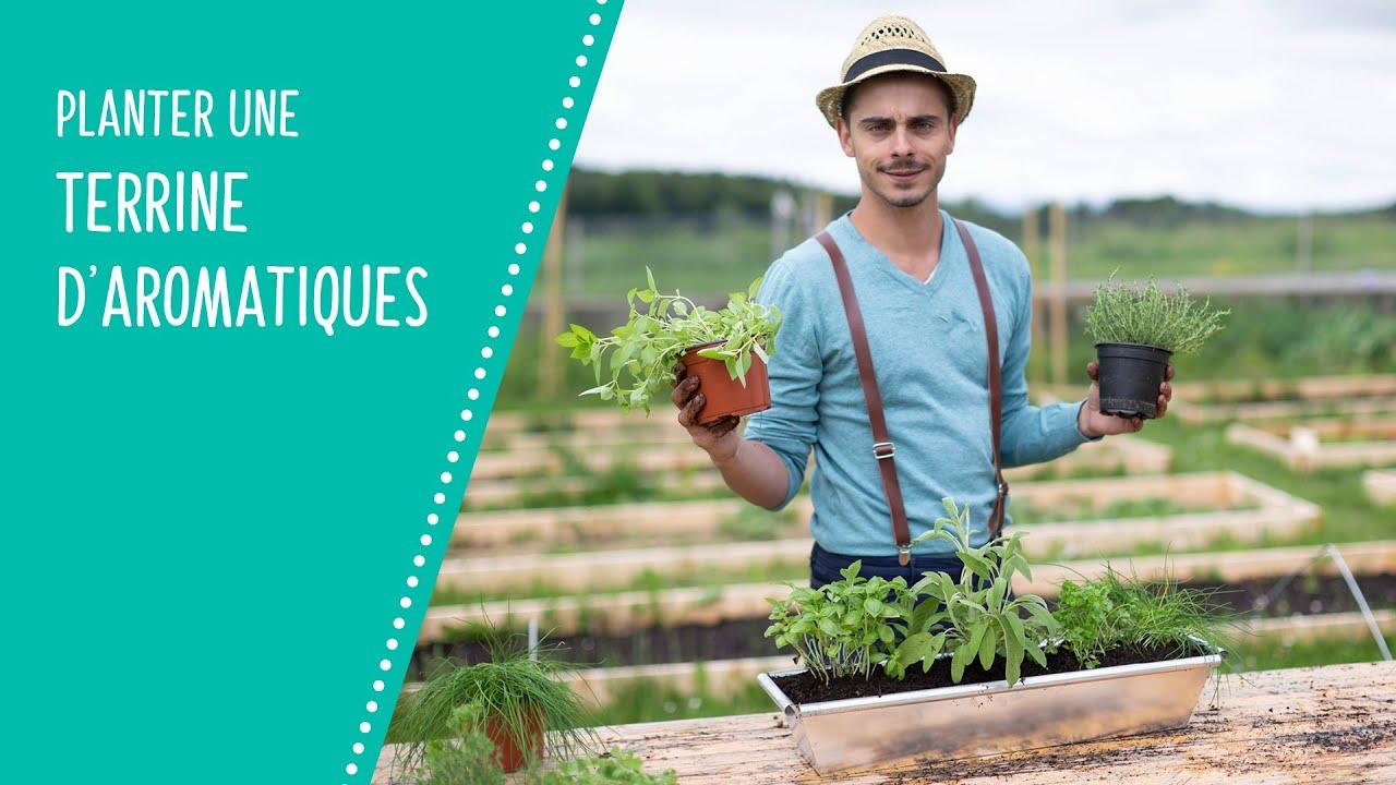 Planter Herbes Aromatiques Jardiniere planter une jardinière d'aromatiques