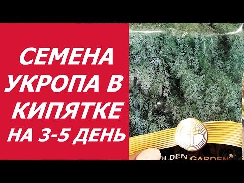 УКРОП В КИПЯТКЕ - 3 , 5 ДЕНЬ !!!