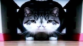 """Когда кот выпил много валерьянки.;""""3"""