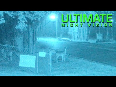 Urban Deer Viewed through Gen 3 White Phosphor Night Vision PVS-14