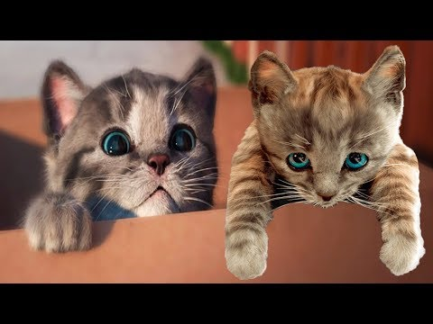Play Fun Pet Care Kids Game - Little Kitten My Favorite Cat