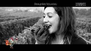 Georges Duboeuf Harvest Video 2018 - Beaujolais Nouveau