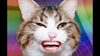Funny Animals - Funny Cats and Dogs Vines Moments Compilation 2019 #8