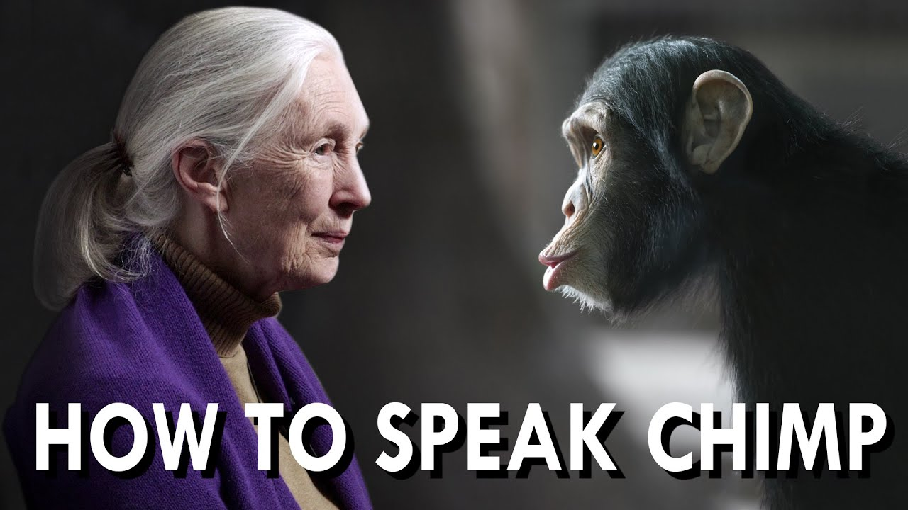 What separates us from chimpanzees essay