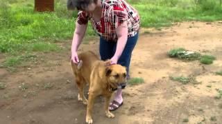 How To Use Dog Grooming Deshedding Tool